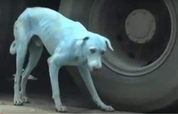 Video: ¿Por qué los perros de la India estaban cambiando de color?