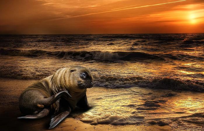 California: Leones marinos están muriendo en las playas