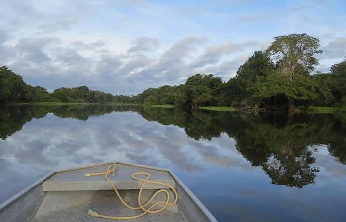 Papa Francisco pedirá por la protección de la Amazonía