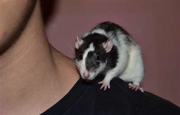 Increíble ataque de ratas a una adolescente parapléjica