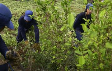 EE.UU criticó la participación de las Farc el plan antidrogas de Colombia