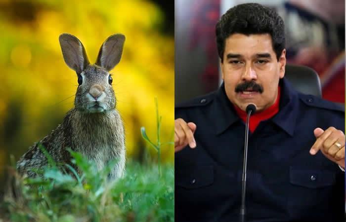 """Maduro lanza el """"Plan conejo"""" para combatir el hambre en Venezuela"""
