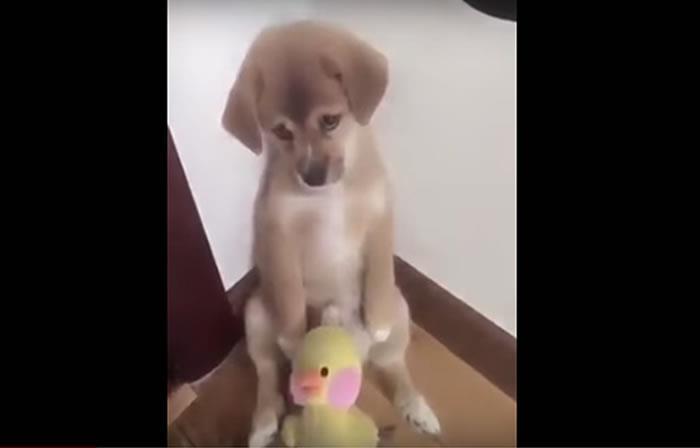 Video: Cariñoso gesto de un perrito al ser regañado