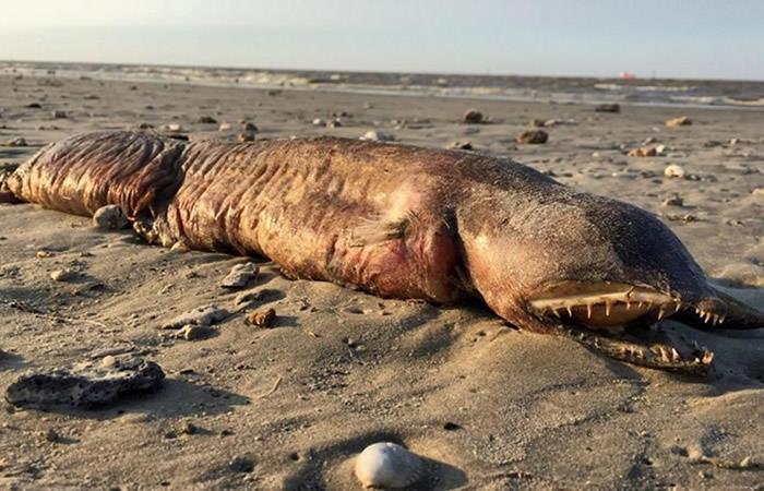 Huracán Harvey: Identifican al 'monstruo marino' que apareció en Texas