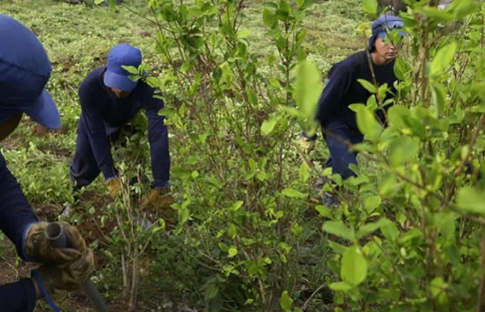 William Brownfield: Colombia 'no merece' que se cuestione su lucha antidrogas