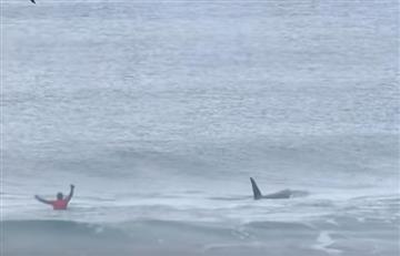 Video: Surfistas son sorprendidos por dos ballenas en plena competencia