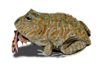 ¿La rana másgigante capaz de comer dinosaurios?