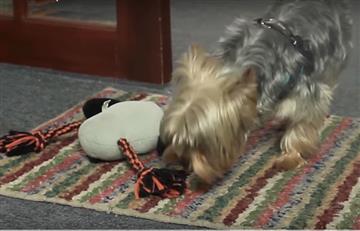 YouTube: La mejor manera de eliminar el olor a orina de las mascotas