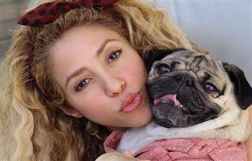 Shakira y Piqué, más juntos que nunca