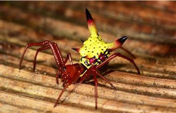 Honduras: Hallan una araña que se parece a Pikachu