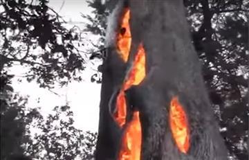 California: Extraño momento cuando se quema un árbol por dentro