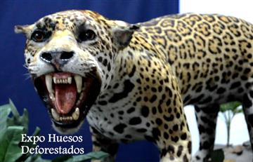 Huesos deforestados, una muestra de arte sobre especies en peligro de extinción