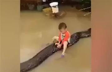 Video: Niño de 3 años monta en el lomo de una pitón gigante