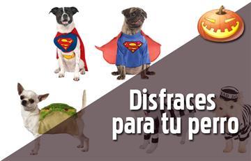 Los mejores disfraces para tu perro
