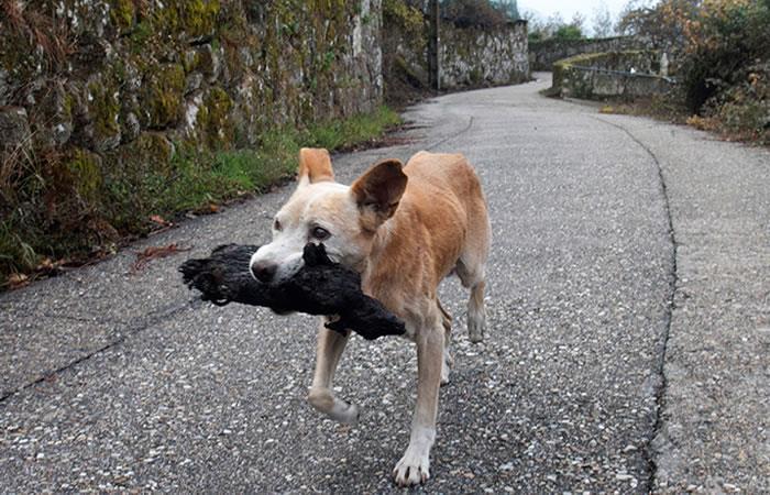 Galicia: Conmovedora foto de una perrita con su cría calcinada