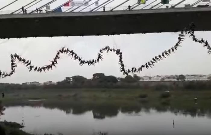Video: 245 personas hicieron 'Bungee Jumping' al tiempo