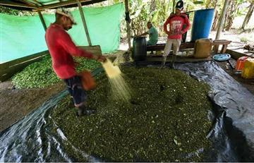 Campesinos protestan contra erradicación de cultivos ilícitos