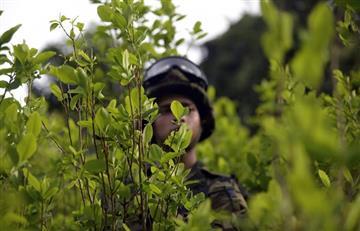 """La DEA afirma que cocaína de Colombia sigue siendo """"amenaza"""" para EE.UU."""