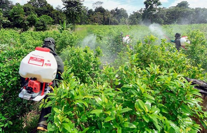 Campesinos se movilizan contra erradicación de narcocultivos. Foto: AFP