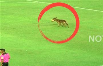 Perro policía se roba el balón en pleno partido y causa furor en redes
