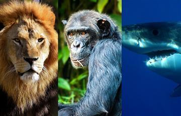 Animales como leones, chimpancés y tiburones serán protegidos por la ONU
