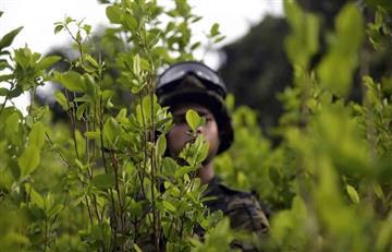 Naciones Unidas y el Gobierno emprenden una lucha contra el narcotráfico