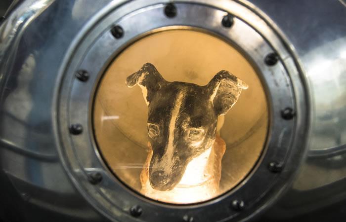 La perrita Laika, enviada al espacio hace 60 años