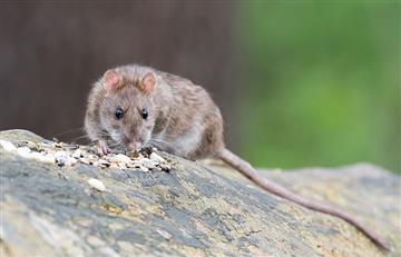 Inglaterra: Hallan dientes de 'ratas' de hace 145 millones de años