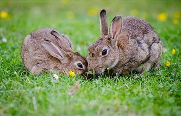 Polonia anima a sus ciudadanos a reproducirse como conejos