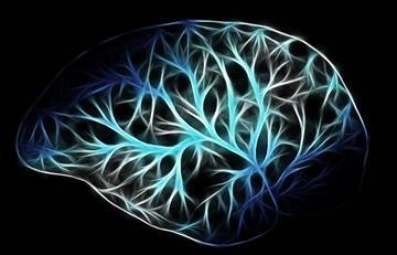 Implante cerebral lograría potenciar la memoria humana