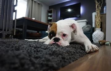 Oración para pedir por la salud de las mascotas