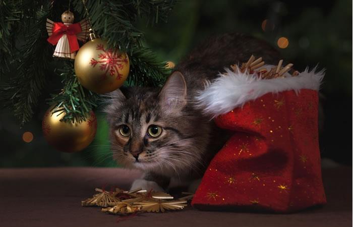 Navidad: Cómo hacer que la decoración sea segura para las mascotas