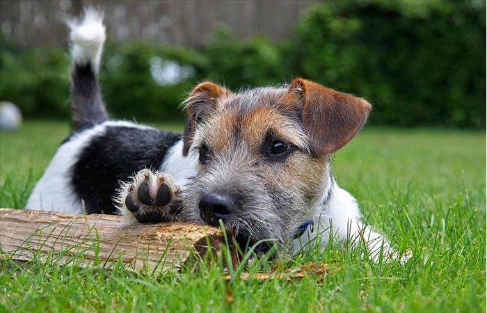 Oración a San Roque para encontrar a un perro