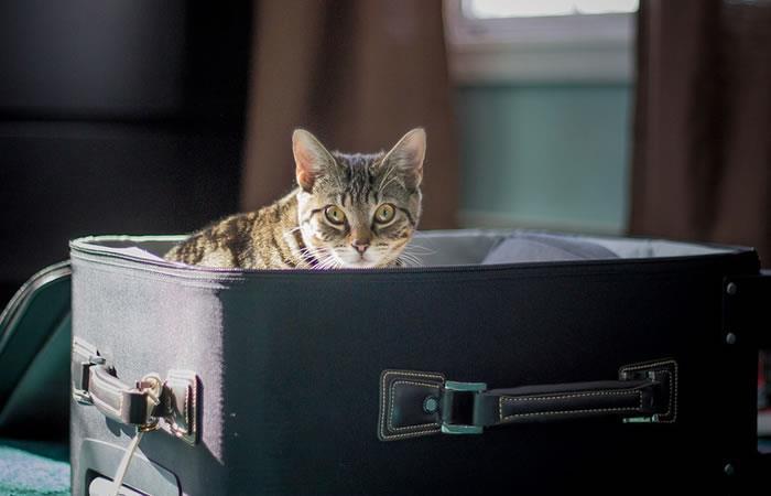 ¿Cómo proteger a tu mascota en una mudanza?