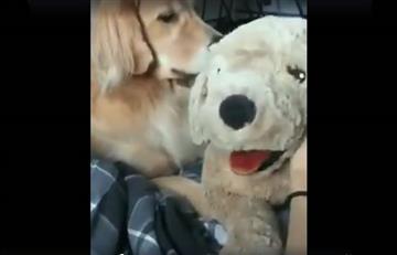 Facebook: Reacción de un perro celoso se vuelve viral