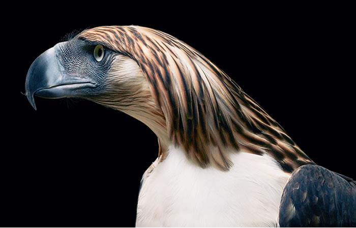 Fotografías conmovedoras de animales en peligro de extinción