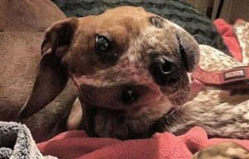 Viral: Escalofriante imagen de un perro deforme conquista las redes