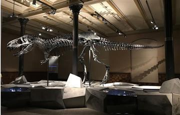 Descubren extraño dinosaurio con mezcla de diferentes animales