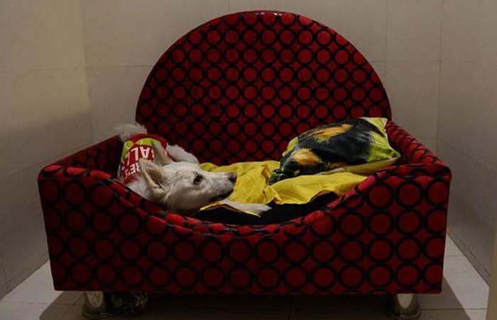 India: El primer hotel de lujo para perros abre sus puertas
