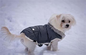 ¿Qué ropa necesitan los perros en invierno?