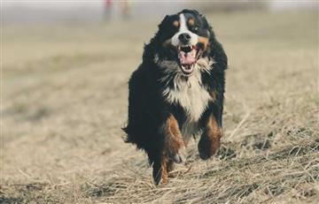 ¿Cómo evitar que el perro salte al saludar?