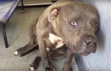 En Armenia un perro se arrojó desde un piso 11 por el estruendo de la pólvora