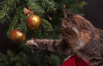 Video: Árboles de Navidad Vs. Gatos, se toman las redes