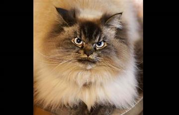 YouTube: El gato que odia la Navidad se tomas las redes