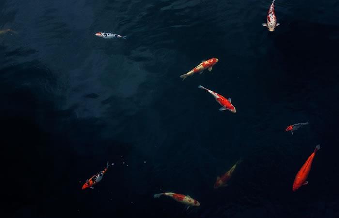 ¿El grito sexual de un pez mexicano puede causar sordera a los delfines?