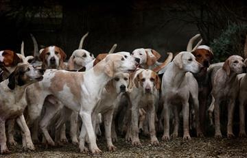 Corea del Sur: Perros se salvan de llegar al sartén gracias a indemnizaciones