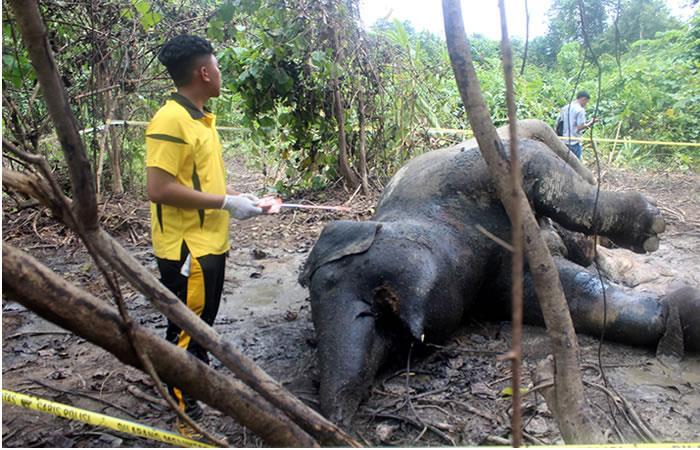 Elefanta embarazada muere