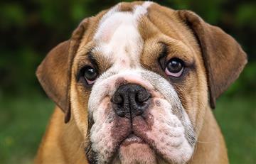 Tener perro en casa alarga la vida