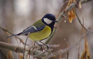 ¿Los pájaros están sufriendo de estrés crónico?