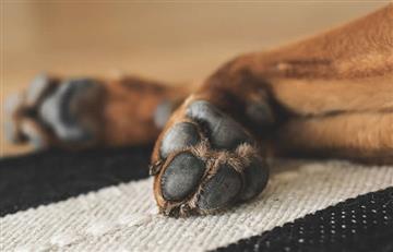 Ciudades rusas matan perros callejeros donde se jugará Mundial 2018
